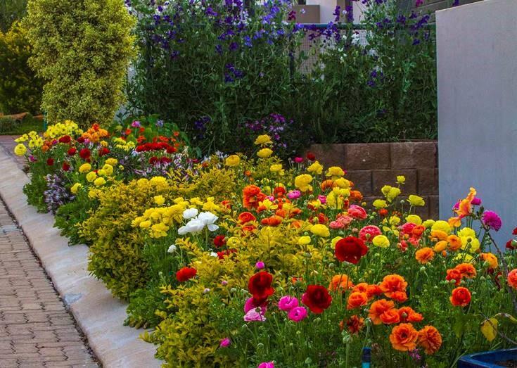 Emmy Murray's colour-burst garden - Kiloran Townsend
